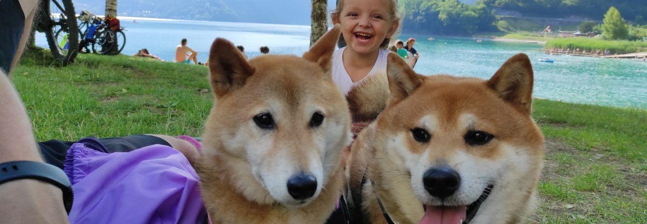 Cani in camper: consigli utili